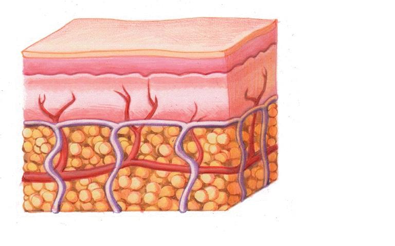структура жира на животе женщине